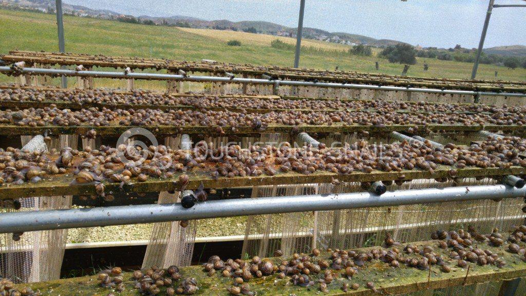 A Sample Snail Farming Business Plan Template