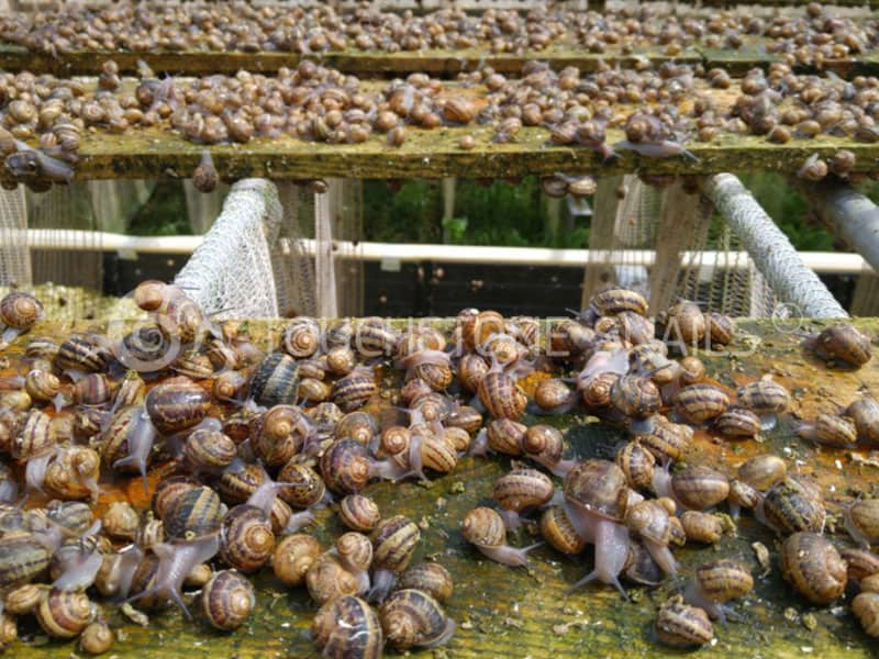 Touchstone Snail Processing